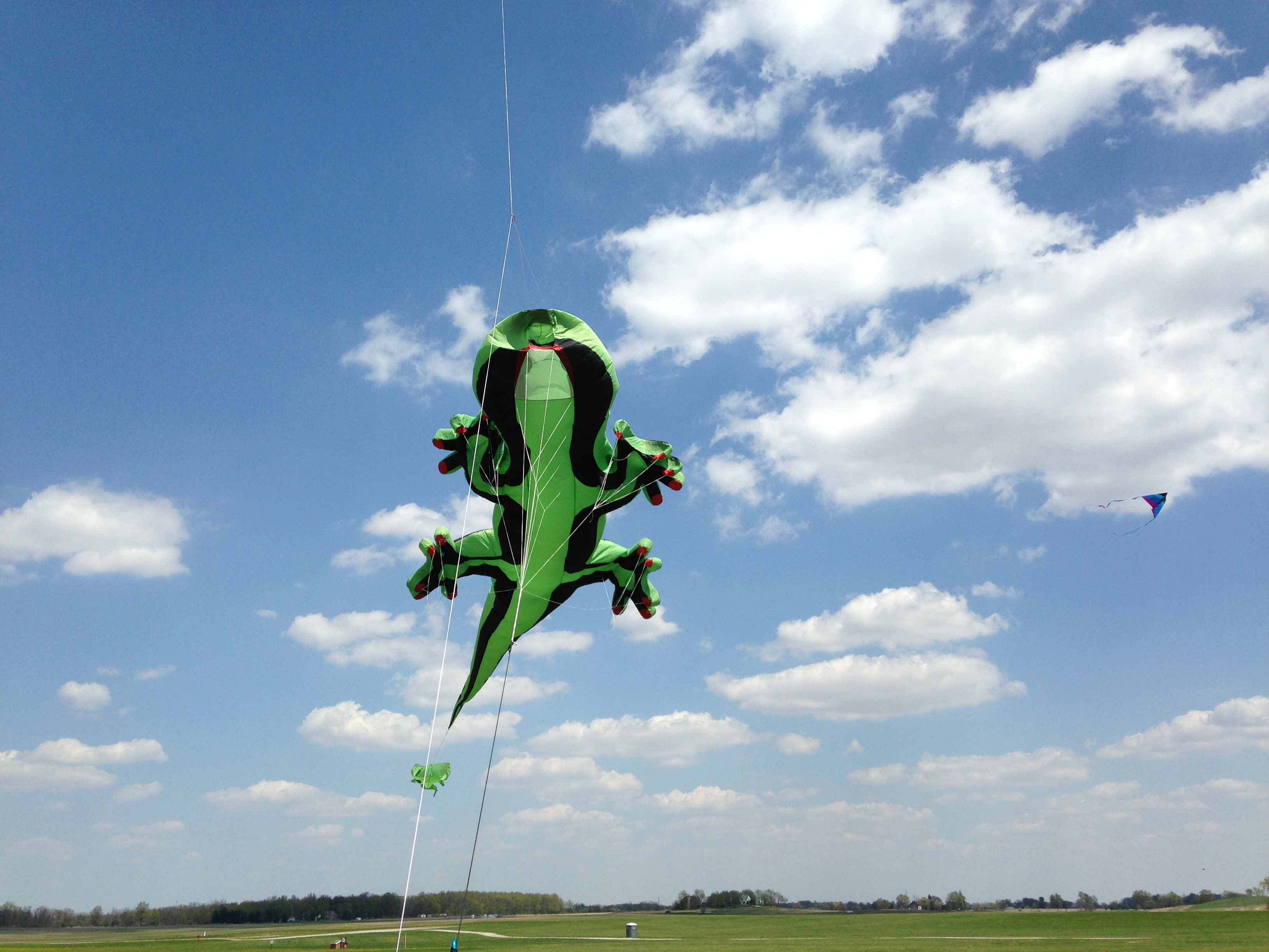 Gekko kite at Toney memorial fun fly